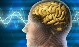 Her Mutfakta Olması Gereken Beyni Çalıştıran Gıdalar