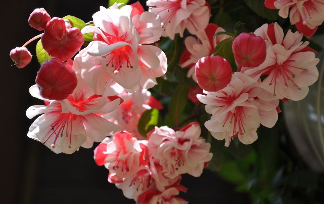Цветы фото и функции