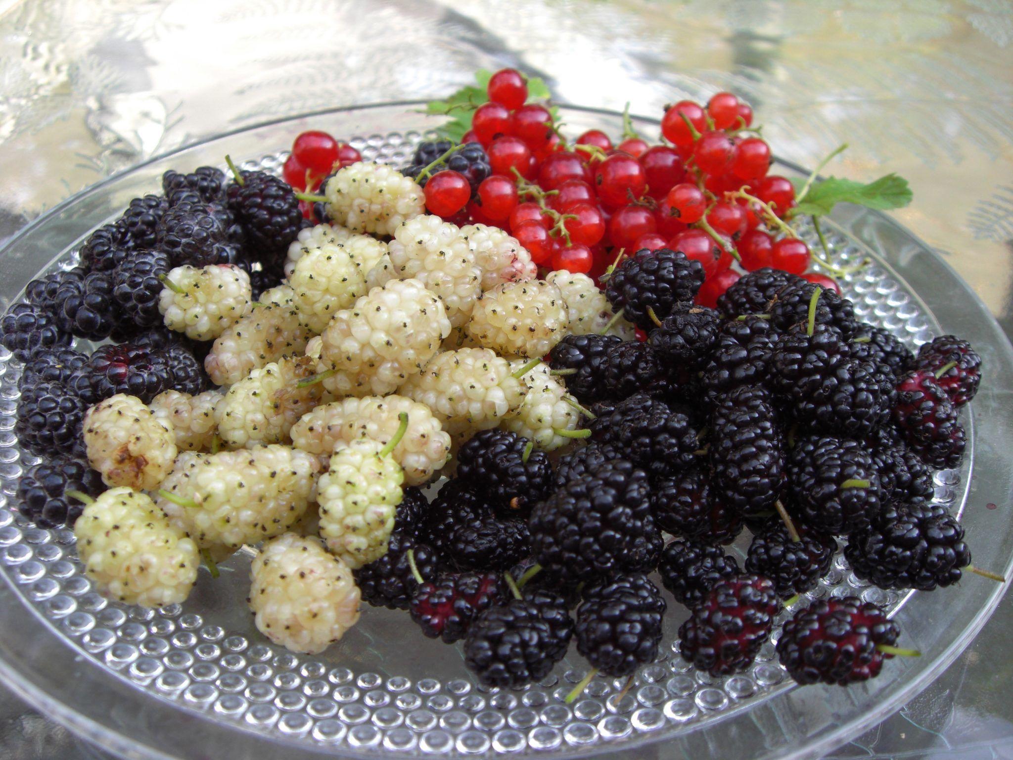 Dut Meyvesinin Önemli Yararları