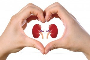 Kidneys_1200