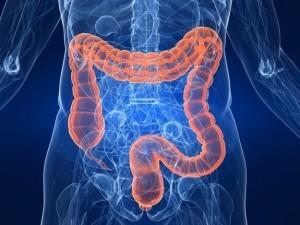 gastrointestinal-tract-120308