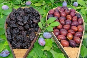 plums-and-prunes