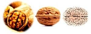 2walnut-brain