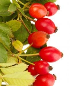 Rosehip_Seed_Oil_Rosa_Mosqueta