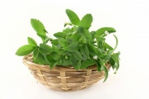 14289886-a-basket-with-stevia-on-a-white-background