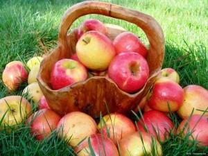 353568__basket-of-apples_p