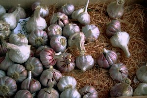 knoblauch_allium_sativum_in_a_store