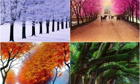 Mevsimsel Duygu Durum Bozuklukları ve Nedenleri