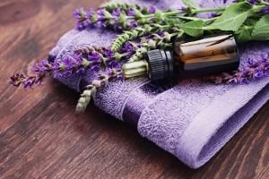 lavender-1-1