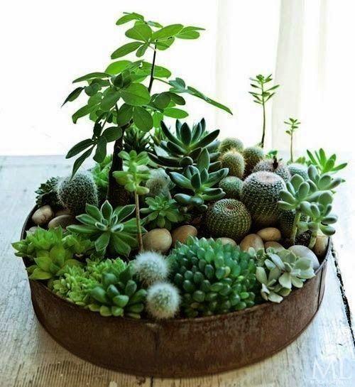Succulent Çeşitleri ve Dekorasyonları