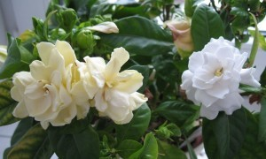 Sonbahar Balkon Çiçekleri