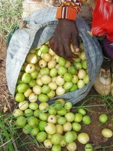 marula-fruit1