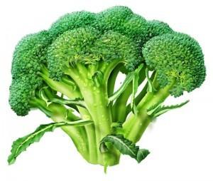 broccoli-alone