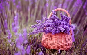fresh-organic-food-lavender-01