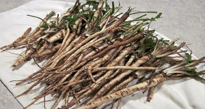 how-to-harvest-and-use-dandelion-root-and-how-to-make-dandelion-tea-600x320