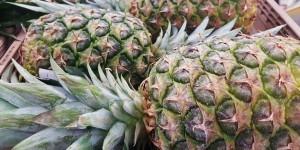 pineapples-1353212_1920