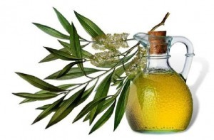 the-scientists-opinions-on-whether-the-tea-tree-oil-kill-lice