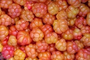 cloudberry-rubuschamaemorus64000