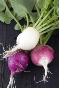 radish-variety