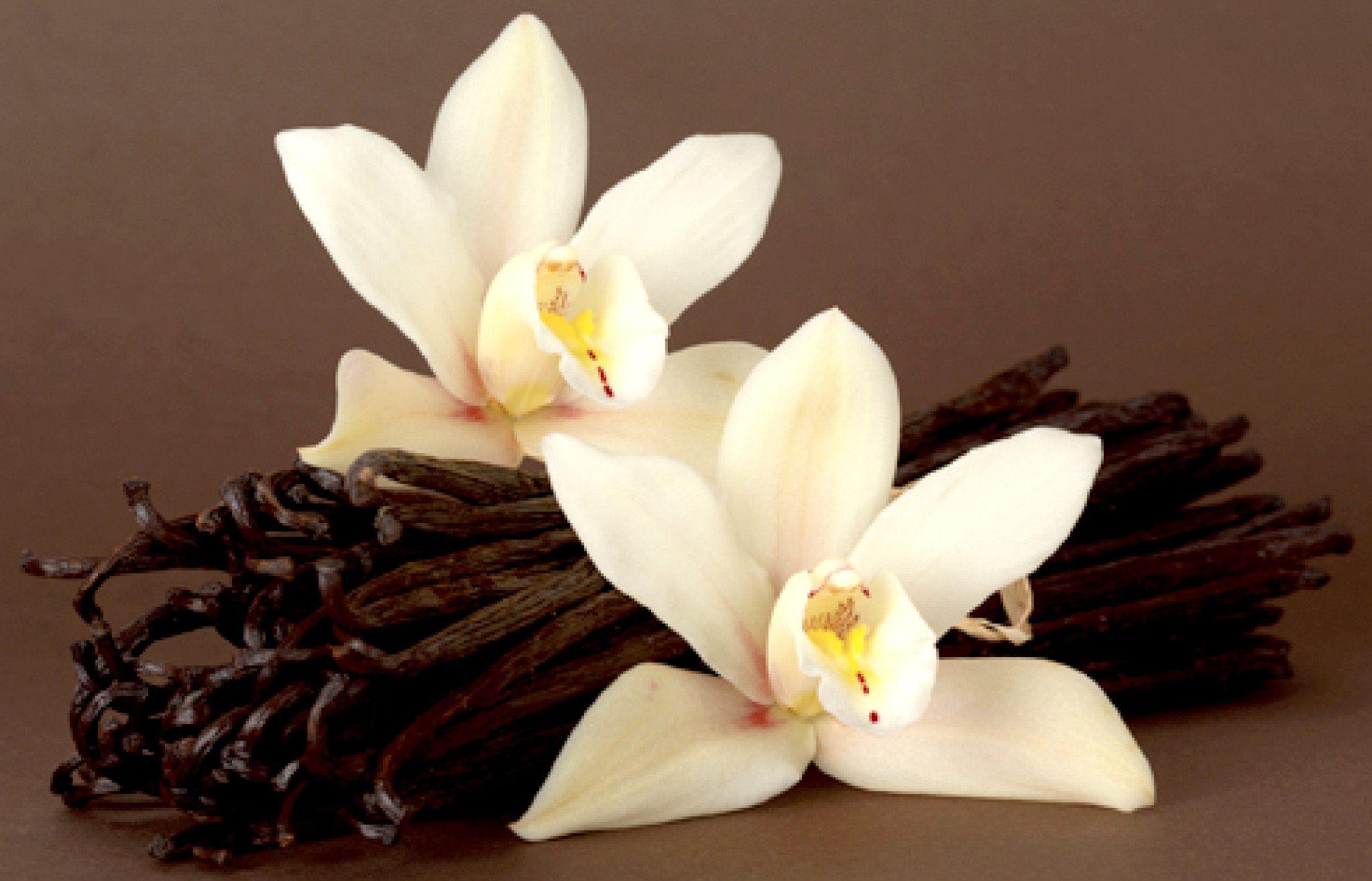 Vanilyanın Faydalarını Biliyor musunuz?